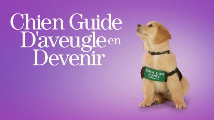 Chien Guide D'aveugle en devenir disney plus